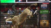TOP BULL: Blue Crush bucks off Cody Nance for 46 points